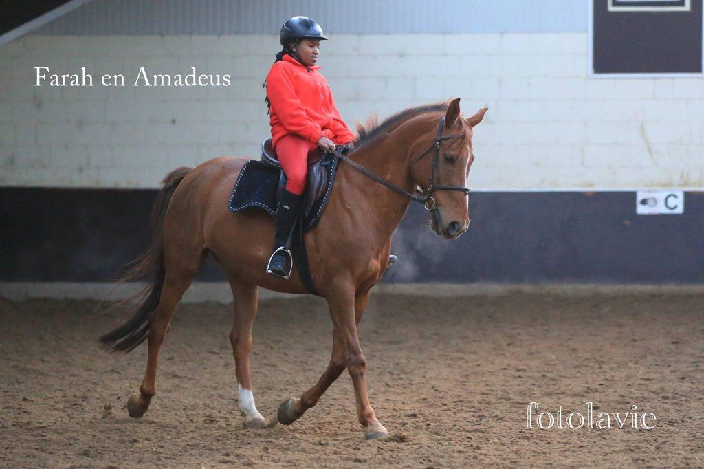 Amadeus en Farah, pony en paardrijles manege De Hazelhorst, Den Ham Overijssel