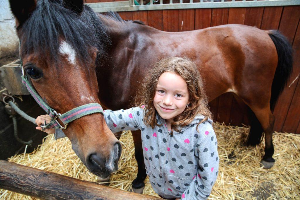 Leuke paarden en pony's, voor rijles en buitenritten