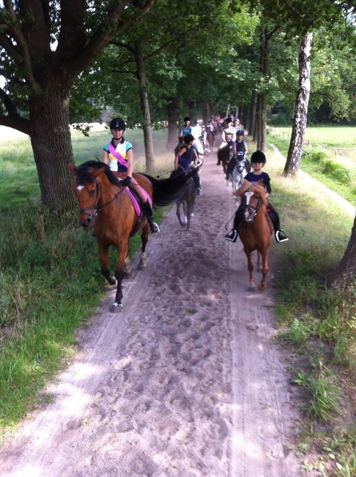 buitenrit-manege-ponykamp-1