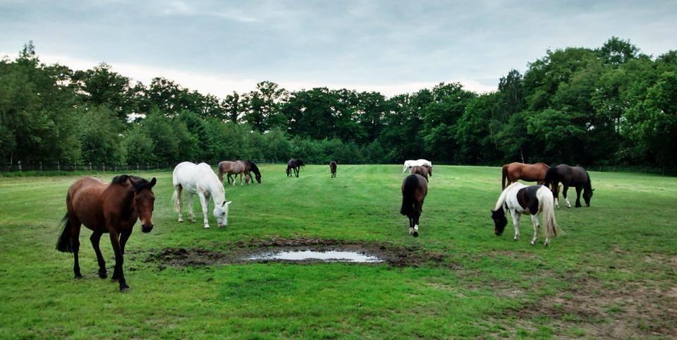 Meer dan 70 pony's en paarden, voor elk wat wils