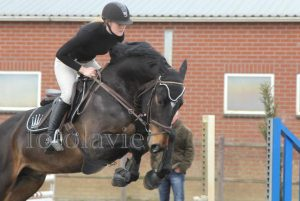 springles dressuurles instructie training pony paard