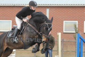 springles dressuurles instructie training pony paard