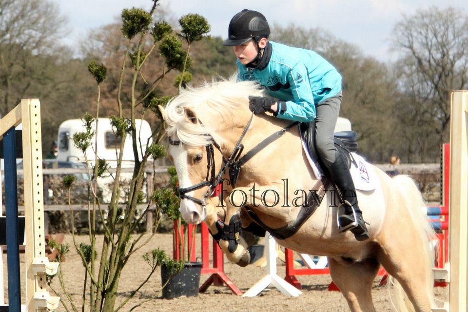 springles instructie training pony paard